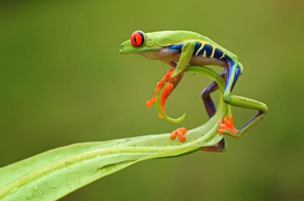 Acrobat © Shikhei Goh