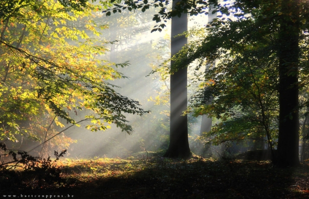 goodmorning Forest (by Bart Ceuppens)