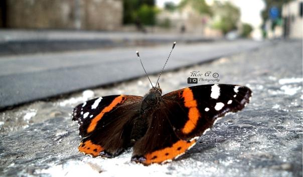 Yay Butterfly © Mo'tasem Awad