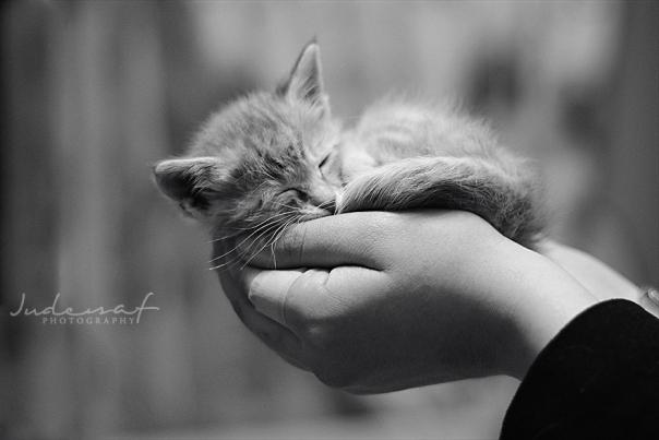littel cute cat © Jude Al-Safadi