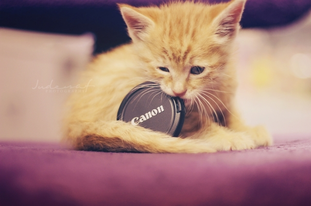 How cute !! © Jude Al-Safadi