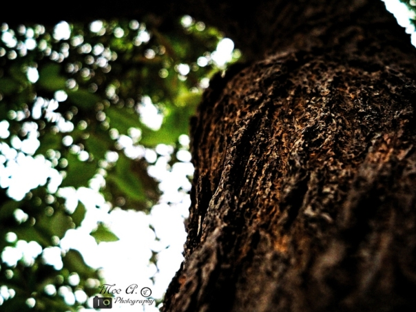 Life-within' © Mo'tasem Awad