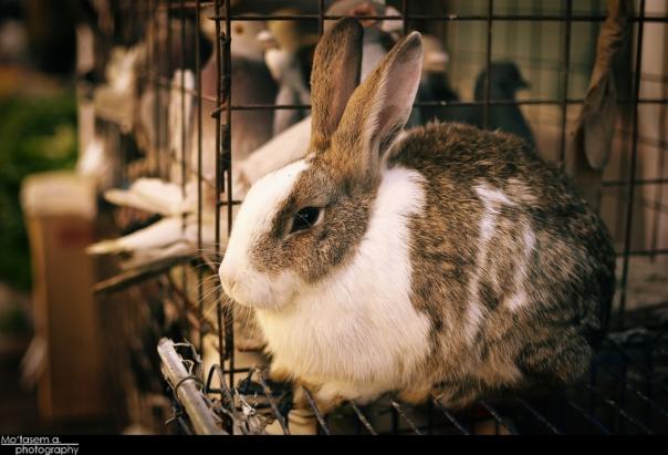 Rabbit He's soo cute!! © Mo'tasem Awad